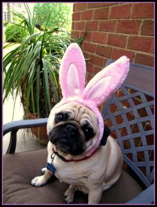 "Easter pug says ""what? It was a busy weekend, and the baby is screaming her head off right now!"""